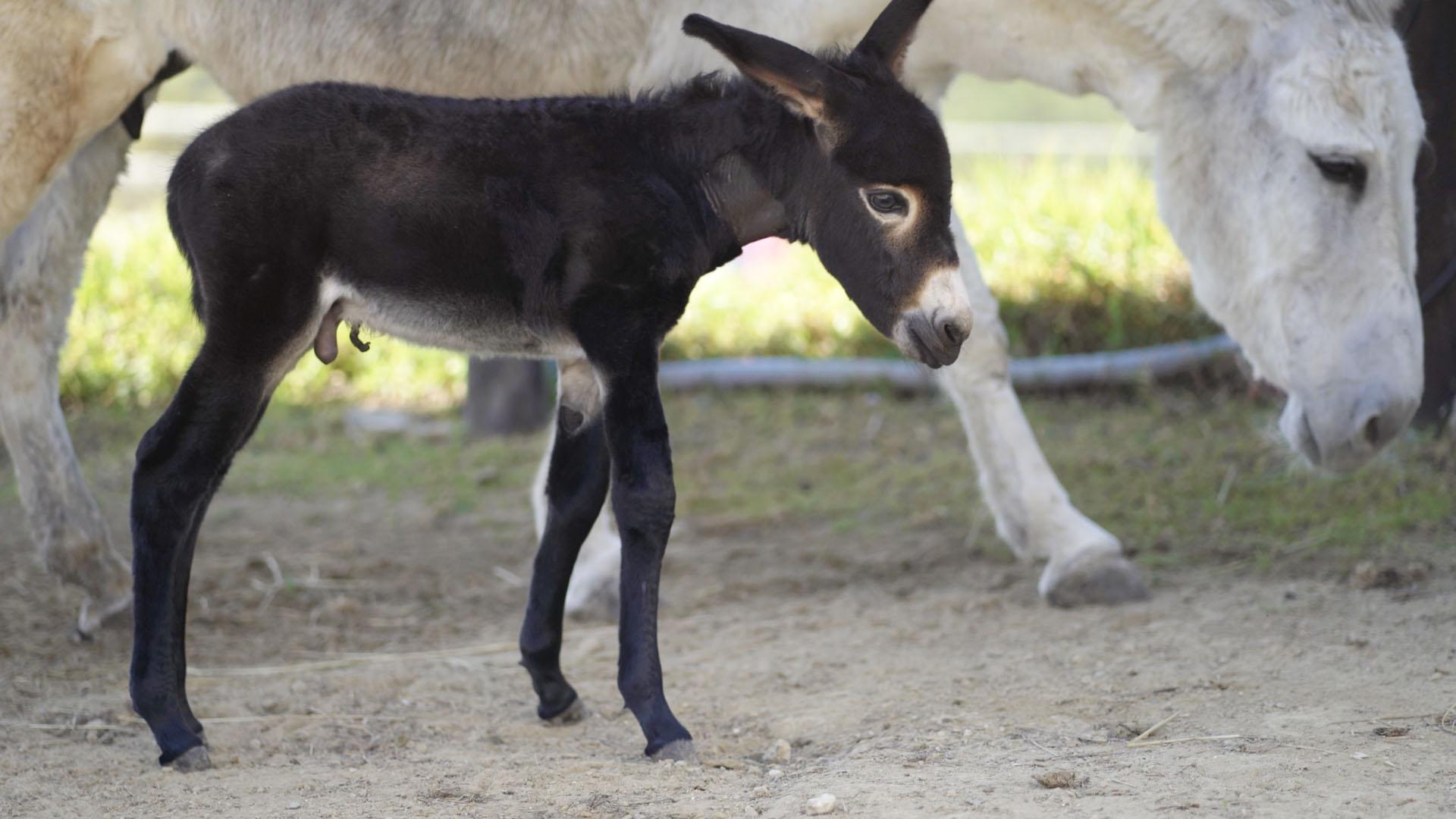 el burrito luz donkey dreamland mijas